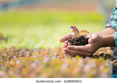 Young plant in hands, Farmer hands are planting seedlings, vegetable garden concept