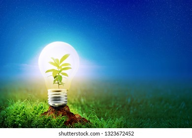 Young plant inside glowing light bulb on fertise soil in meadow at night with star on the sky background. Earth hour concept