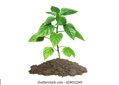 young plant in layer of earth isolated on white background
