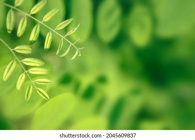 Young plant leaves growing in nature.