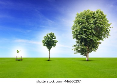 Young plant life process from small to medium size and growing up to growth big tree, metaphor to business concept in development, growing up economy, or life going on.