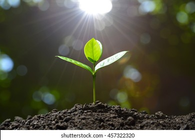 Young plant in the morning light on nature background