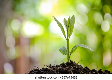 Young plant in the morning light on nature background,Small green plant starting to grow from the pure eco soil over the green grass background