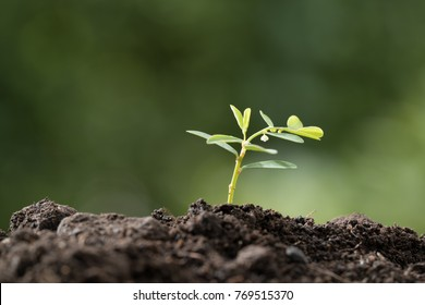 Young plant in the morning light on green blurred nature background