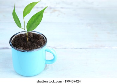 Young plant in mug on color wooden background