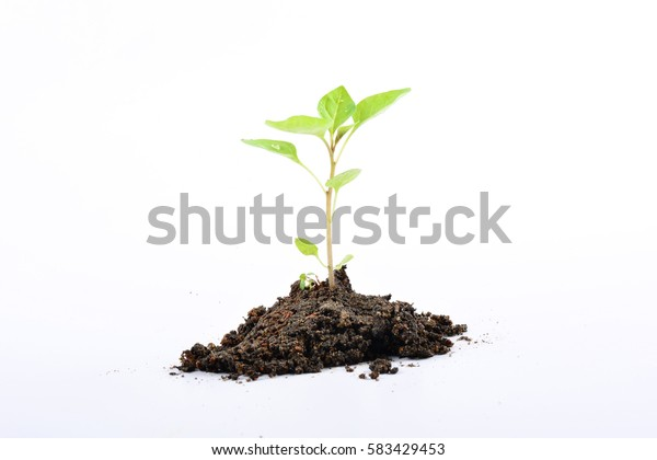 Young plant new life, isolated on white background