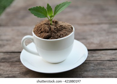 Young plant on the coffee cup