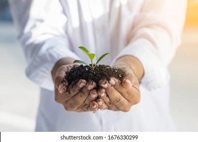 Junge Pflanze auf dem Boden in einer Hand von Geschäftsmann.