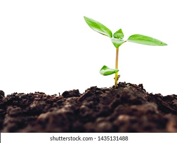 young plant on soil isolate on white background, clipping part