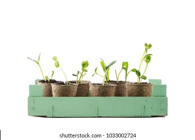 Young plant in a pot isolated on white background