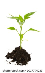 young plant with roots an soil isolated on white background