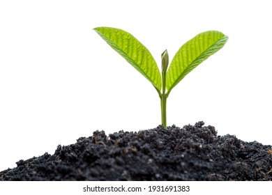 Young plant in soil humus on a white background - Shutterstock ID 1931691383