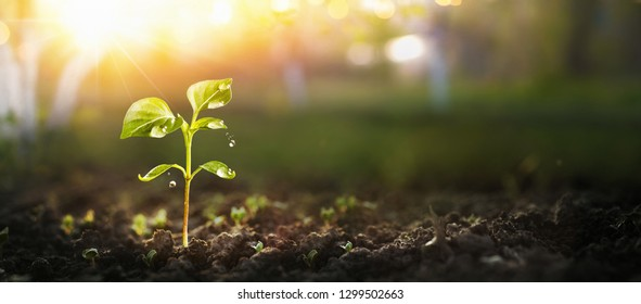 Young Plant in Sunlight, Growing plant, Plant seedling