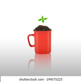 young plant tree growing from soil in red mug isolated on white background