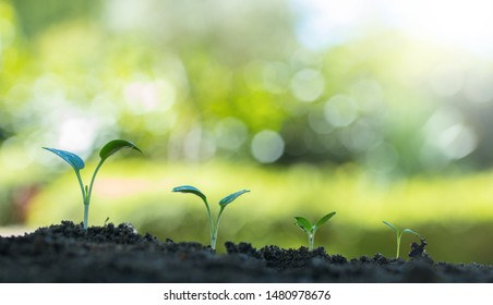 young plants germinating or growing in the ground outdoors