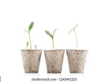 Young plants in pots isolated on white background