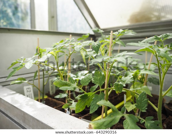 Groovy Young Plants Seedlings Trays Small Greenhouse Stock Photo Interior Design Ideas Philsoteloinfo