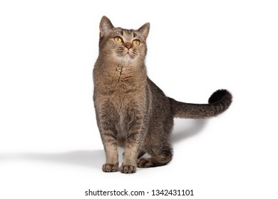 Young playful kitty posing on a white background.Cat isolated on white background.