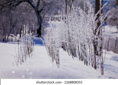 Young plum seedlings in winter. Plants of trees in the garden in the village. Agroindustry in Ukraine.