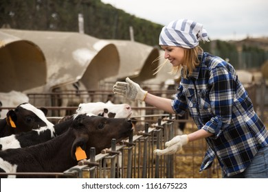 Young positive woman taking care of dairy herd in livestock farm