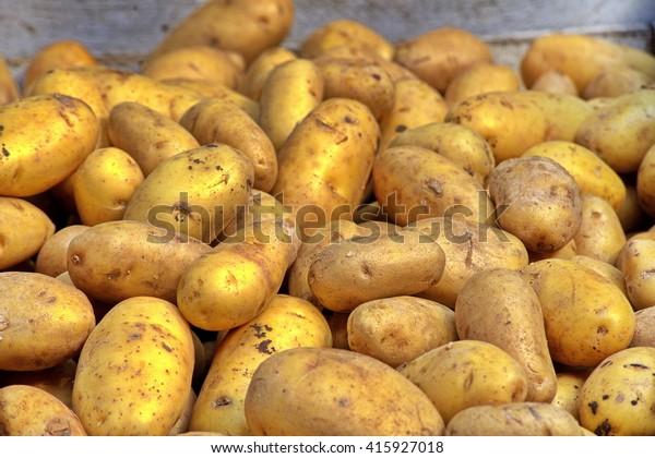 young potato