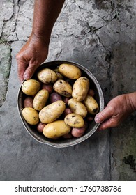 Young potatoes in iron plate with man hands on dark stone background. Summer harvest. Selective focus. Toned image. Mobile photo - Shutterstock ID 1760738786