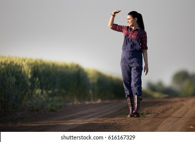 Young pretty farmer girl standing in front of green wheat field and looking in distance with hand blocking sun