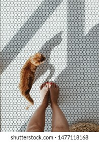 Young pretty ginger kitten stay on white mosaic tile near women's legs. Top view, flat lay pet minimal composition.