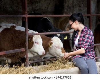 Young pretty girl feeding heifers in front of barn on the farm