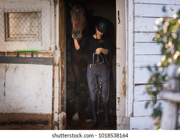 Young pretty girl - prepring her horse for riding