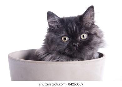 Young, pretty kitten