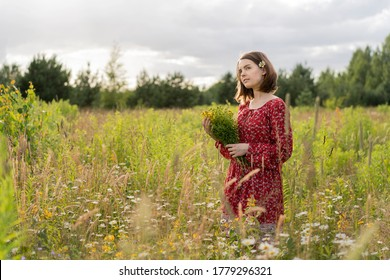 Young pretty woman in red dress with wild flowers on the green field. Woman is gathering healing plants and herbs - yellow St. John's wort (tutsan or Hypericum ) in linen bag. Forest on background.