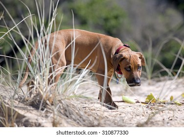 young pup playing on the beach
