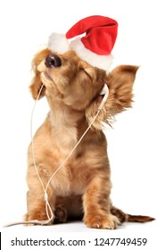 Young puppy listening to music on ear buds wearing a Christmas Santa Claus hat.