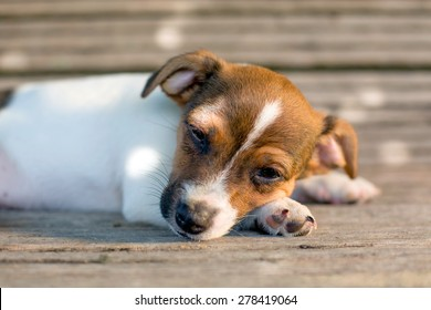 A young puppy looks tired and squints with his eyes while laying his head on his paws on a wooden bench.