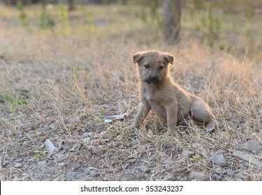 young puppy in need of care, protection and love to live another day