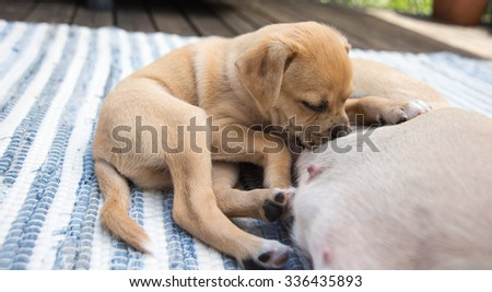 Young Puppy Nursing On His Mom Stock Photo Edit Now 336435893