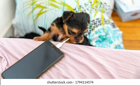 Young puppy playing with the charger of a charging laptop, already a fan of technology