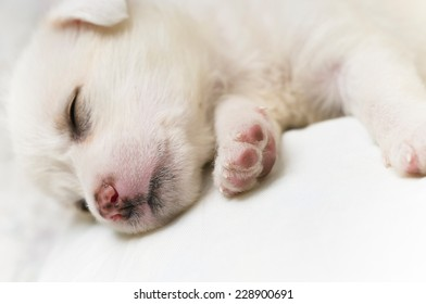 Young puppy sleeping peacefully