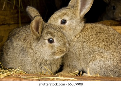Young rabbit animal, farm and breeding