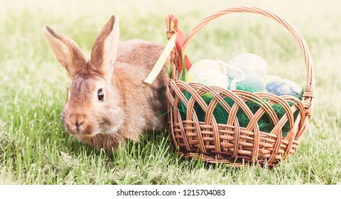 young rabbit on grass with easter basket and eggs