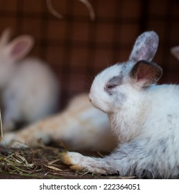 Young rabbit sleeps