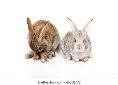 young rabbits over white background