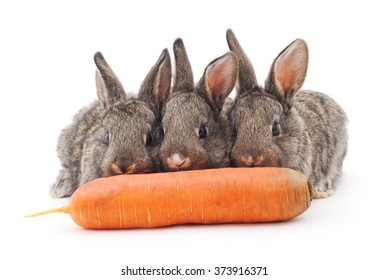 Young rabbits that eat carrots on a white background.