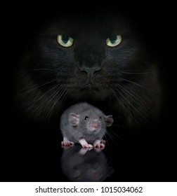 young rat and cat in front of black background
