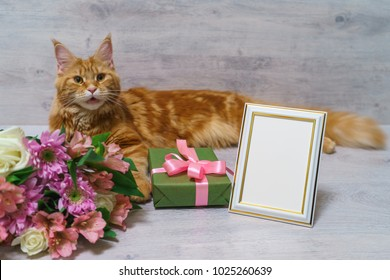 Young red cat of Maine Coon breed lying on wooden table with colorful bouquet of roses, chrysanthemum and alstroemeria flowers with gift box and empty photoframe