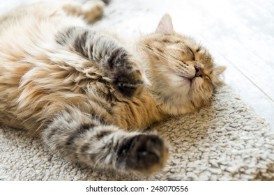 Young red cat sleeping with eyes closed - on white carpet