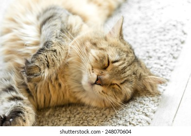 Young red cat sleeping with eyes closed - on white rug