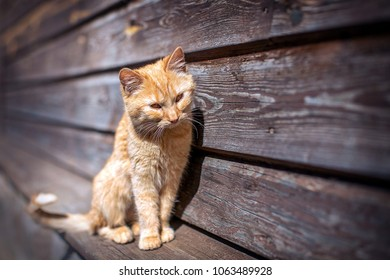 Young red kitten sitting in the sun