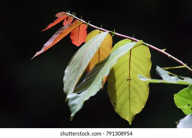 Young, red leaves on a tree branch.